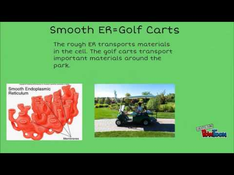 analogy for smooth er Cell Analogy- Amusement Park - YouTube