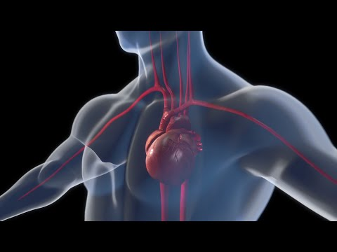 An innovative cardiac support system for weakened hearts