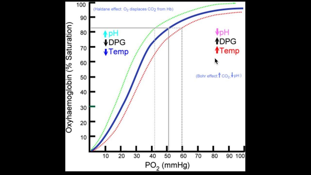 Right-shift of Oxygen-hemoglobin dissociation curve - YouTube