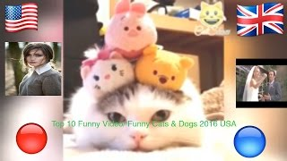 Top 10 Funny Video/ Funny Cats & Dogs 2016 USA