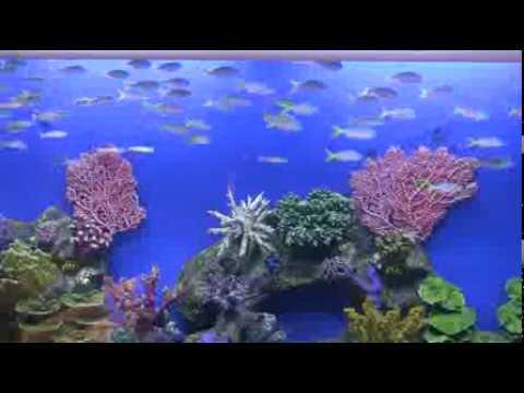 Saltwater Aquarium School Of Fish