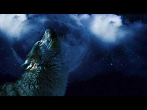 Wolf Howling At Moon Sound Effect