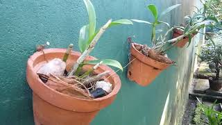 Landscape Design Ideas Garden Design For Small Gardens In Sri Lanka Youtube