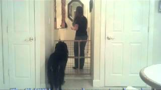 Separation Anxiety Behavior Modification Training