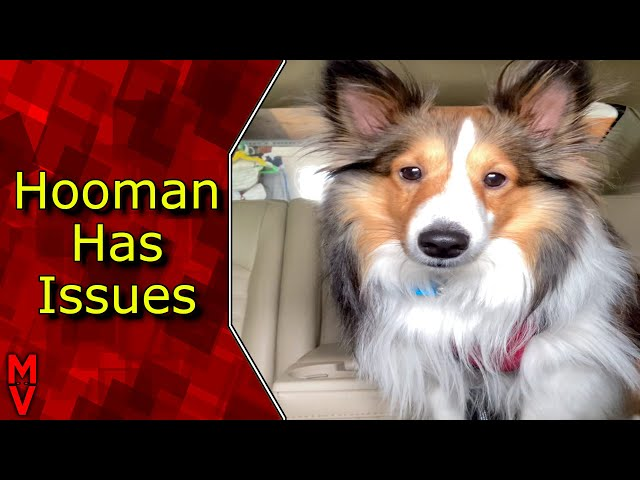 Dog Thinks Human Has Issues! #Shorts