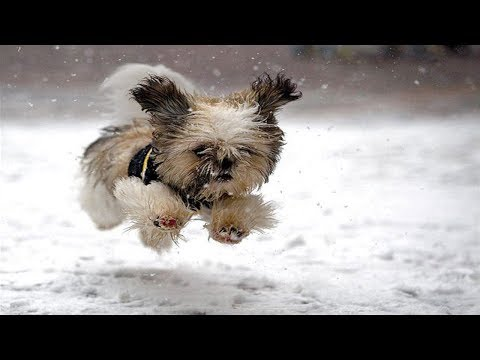 Puppies Discovering Snow For The First Time