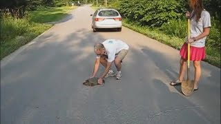 Decreasing the amount of Maine turtles that end up as roadkill