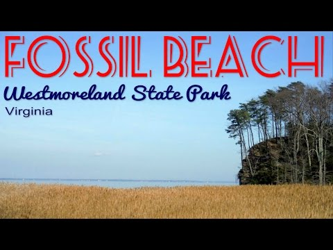 Hike To Fossil Beach At Westmoreland State Park Near Montross, Virginia