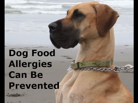 Can Dog Boots Help My Dog With Grass Allergy