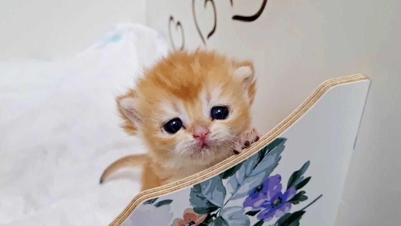 Kitten Mickey doesn't want to sleep 😍
