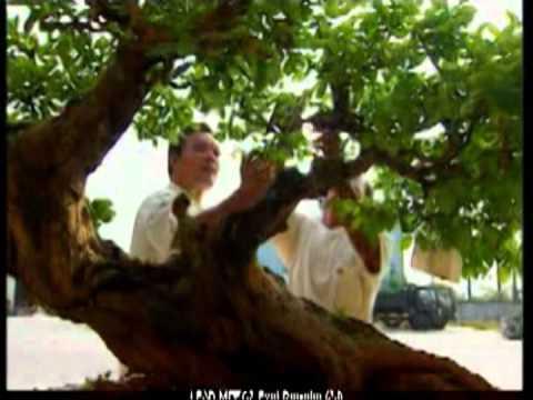 Vietbonsai.vn - VTV Thăm vườn sinh vật cảnh Kẻ Sặt