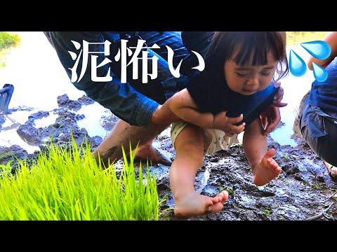 【パパと田植えデート】泥が怖すぎて泣く娘【1歳児】