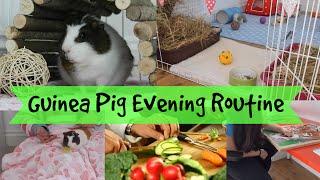 Guinea Pig Evening Routine - Winter | Hamster HorsesandCats