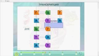 Транскрипция.Биосинтез белка.