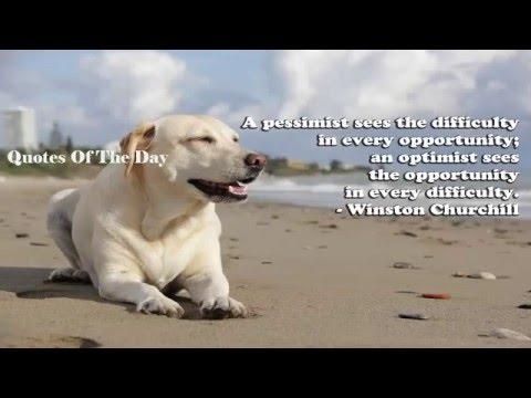 Positive Quotes   Famous Motivational Quotes (Positive Motivational Quotes  About Life)   YouTube