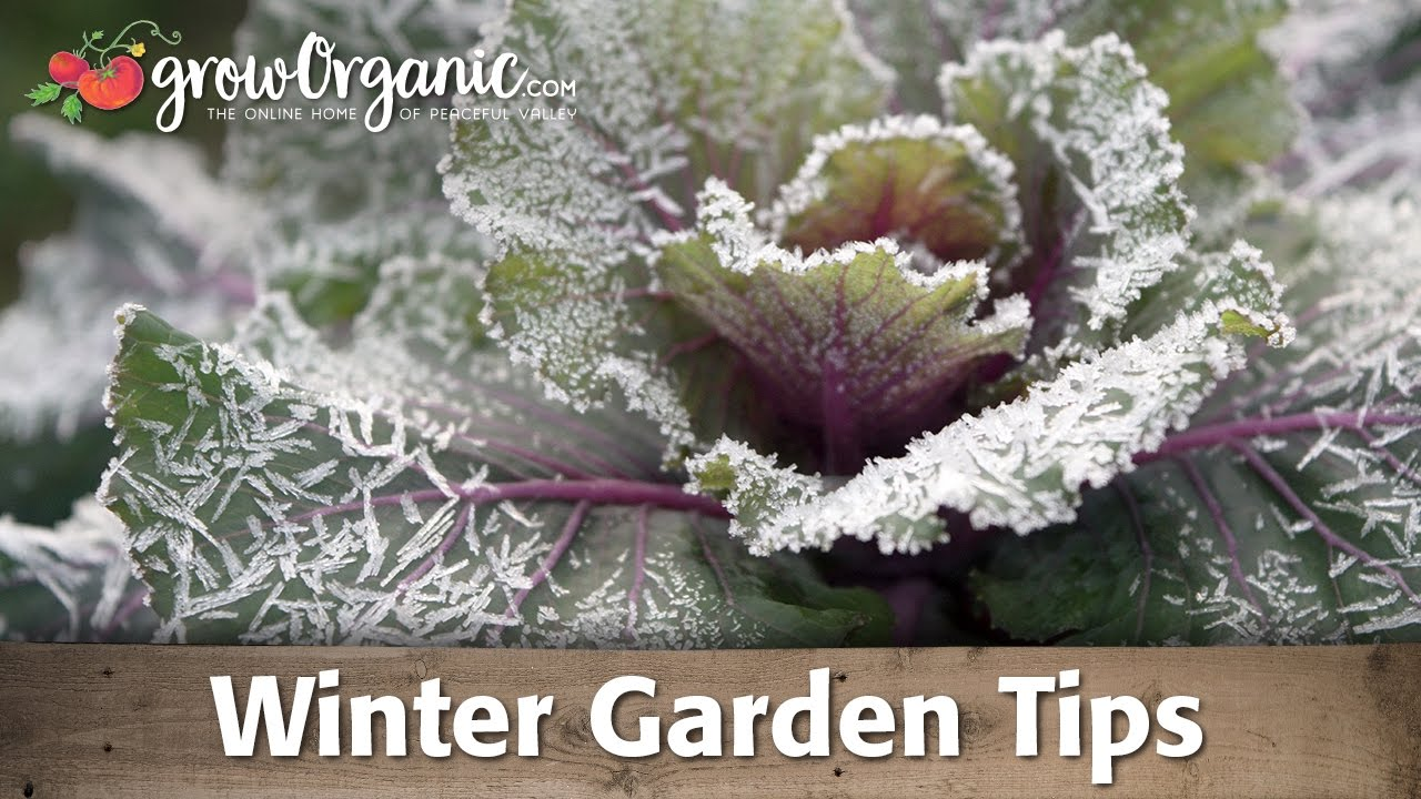 15 great tips to help your garden in the winter youtube