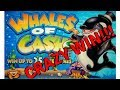 The Biggest Win Combination (16X with Starfish) on Whales ...