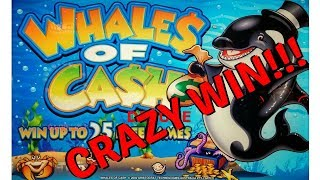 WHALE SIZED HANDPAY!  WHALES OF CASH DELUXE SLOT MACHINE POKIE SEMINOLE HARD ROCK