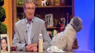 The Paul O'Grady Show - Waupie the lamb