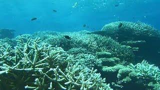[グレートネイチャー] エメラルドグリーンの海に浮かぶ純白の島・誕生の秘密   モルディブ   NHK
