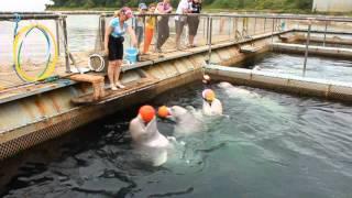 Центр адаптации морских животных под Находкой
