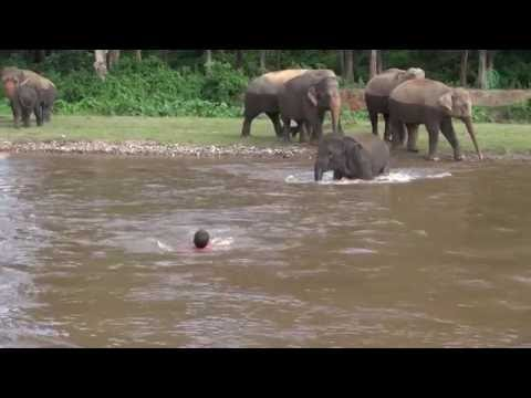 Thumbnail: Elephant Come To Rescue People