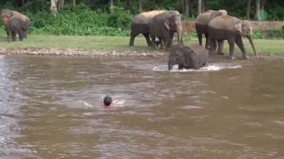 Repeat youtube video Elephant Come To Rescue People