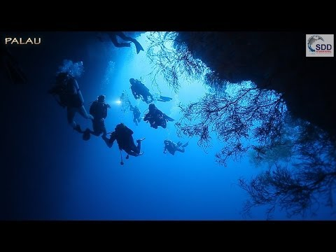 Palau Underwater