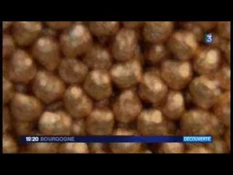 Reportage - Chocolaterie de Bourgogne - Dijon