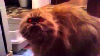 Русская бешеная кошка