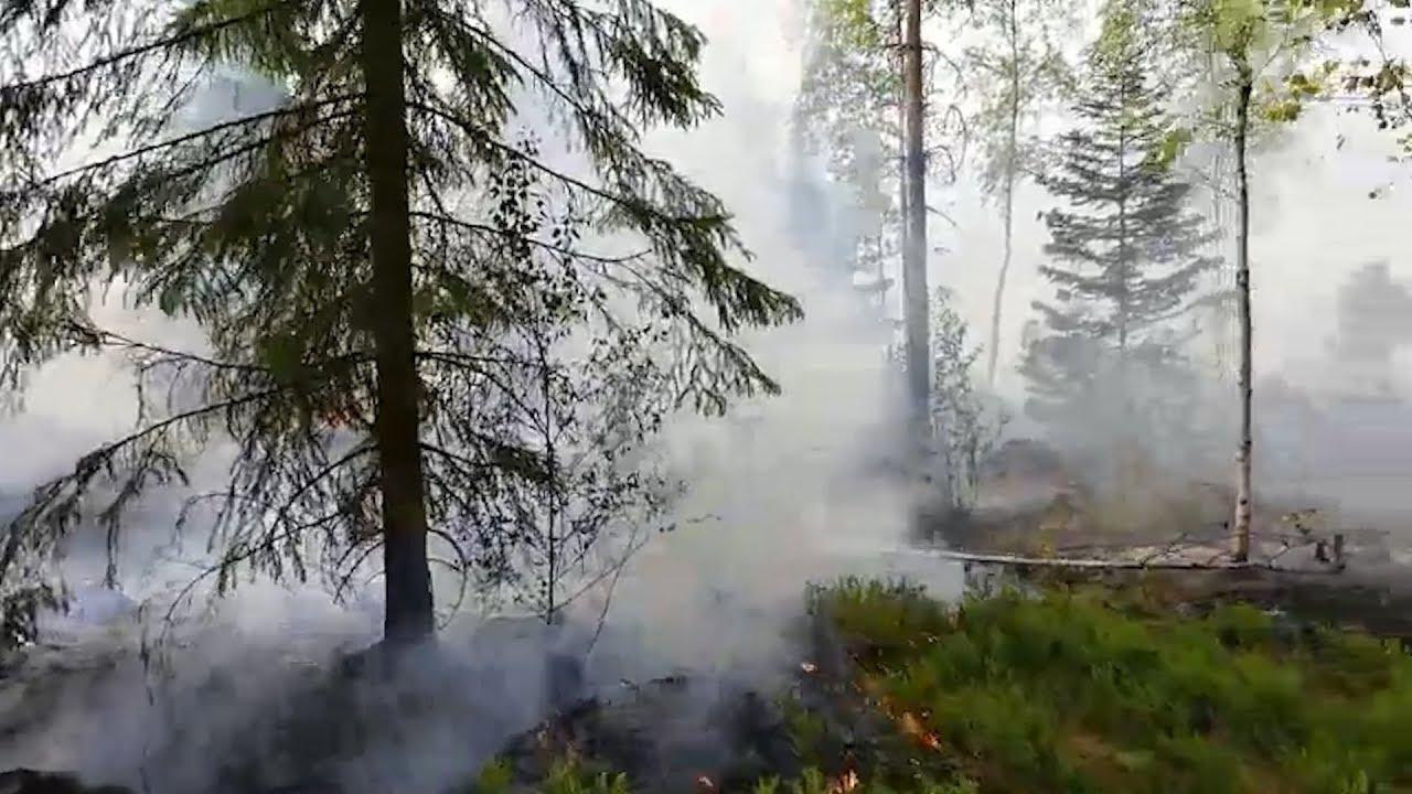 Metsäpalo Kangasalan ja Lempäälän rajalla