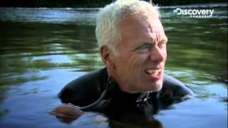 sea lamprey   river monsters