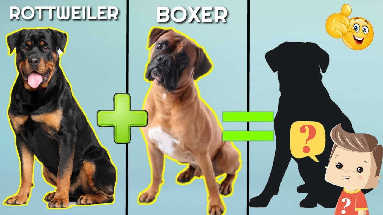 10 Incredible Mixed Cross Hybrid Of Rottweiler Unreal Cross Breed Of Rottweiler Youtube