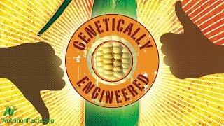هي الكائنات المعدلة وراثيا آمنة ؟ حالة الذرة BT