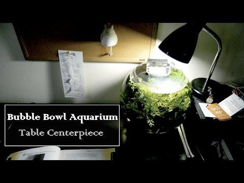 Planted Aquarium Table Centerpiece - 4 Gallon Bubble Bowl