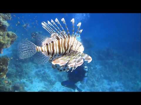 Visit to Sharm El Shiekh Darrend Island Blue Island
