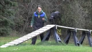 Sable (german Shorthair Pointer) Boot Camp Training Video Minneapolis