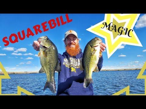 Catching Schools Of Largemouth Bass (Sprague Lake, WA)