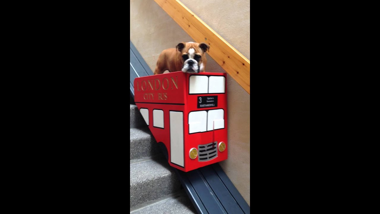 Dog takes the stair lift - YouTube