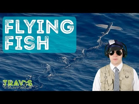 Animal Facts: Flying Fish