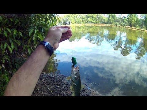 Pescaria de Traíras no pesqueiro Sanga Funda - YouTube