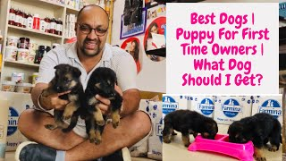 German Shepherd | GSD | Best Dogs | Puppy For First Time Owners | What Dog Should I Get? Bhola Shola