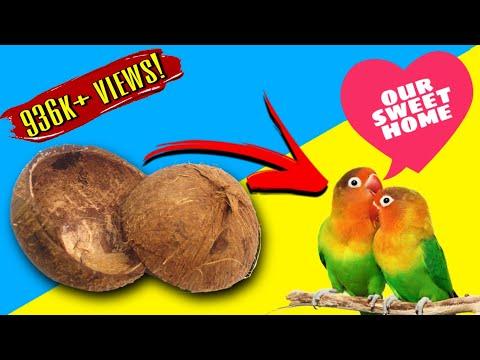 Bird Nest Making |  DIY | Coconut Shell Craft Making | Best out of waste | Coconut Shell Craft ideas