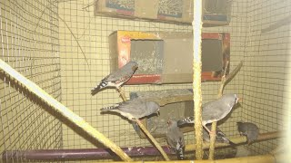 Finches natural cage setup | Finches | wonderpets
