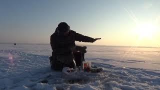 Зимняя рыбалка в минус тридцать, крупная рыба в ступоре