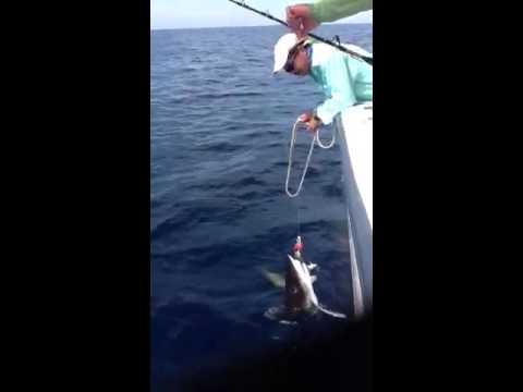 Shark in Haiti