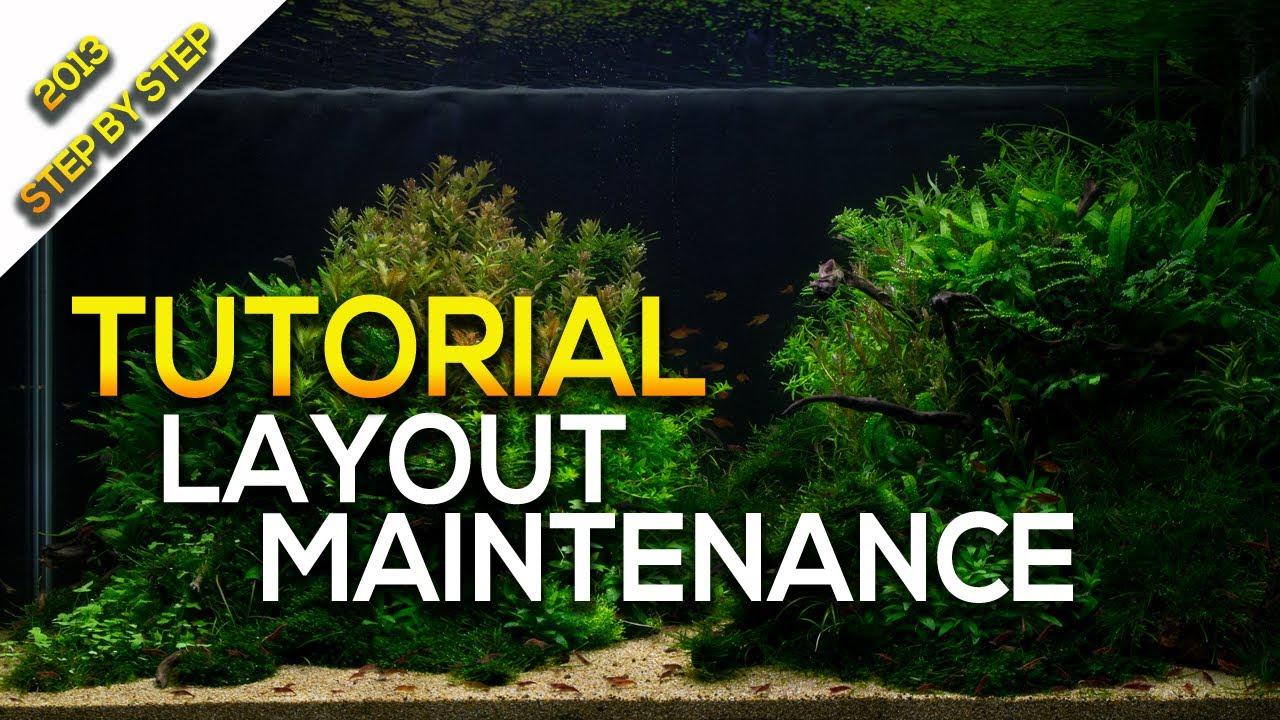 Aquascaping   Aquarium Tutorial Layout Maintenance By Giuseppe Nisi    YouTube