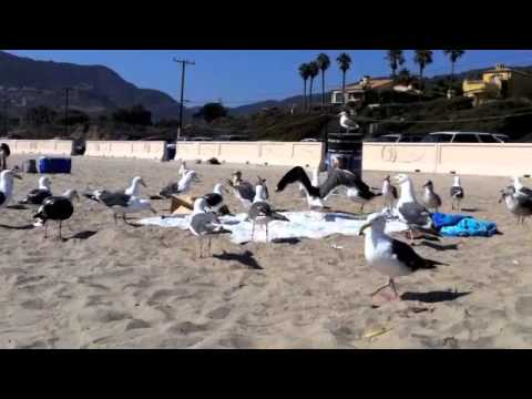 Finding Nemo Seagulls In Real Life Mine,mine!