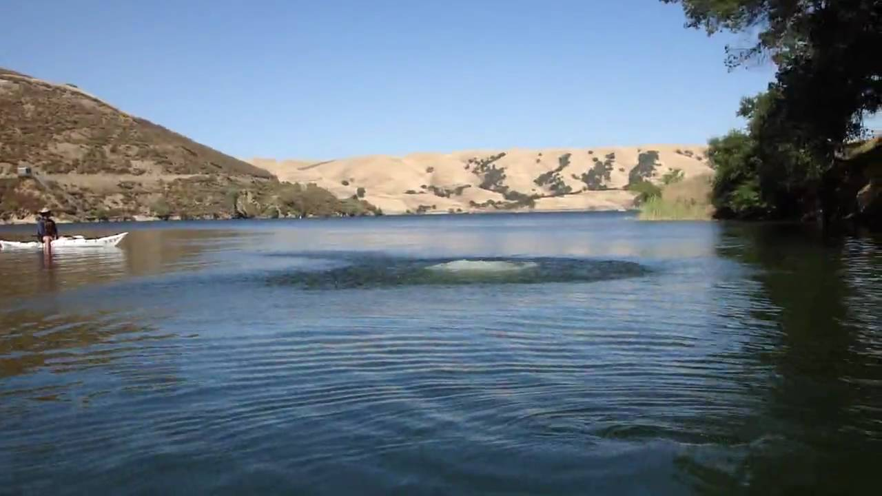 Tree Swing at Lake Del Valle, Livermore, CA - YouTube