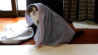 洗濯ネットで遊んでいたらそのまま徘徊するまる。Maru put the washing ...